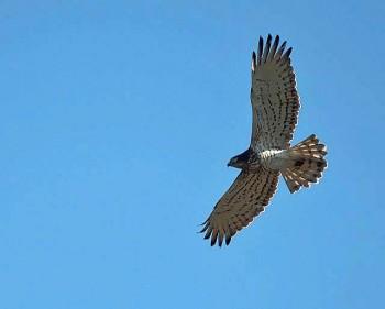 Top 5 mooiste vogelreizen in Spanje