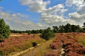 Utrechtse Heuvelrug Ns Wandeling Vanaf Driebergen Zeist