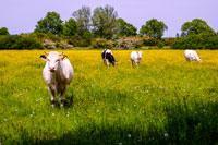 De Mooiste Wandelingen En Wandelroutes In Noord Brabant