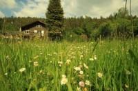 Mooiste Vakantiehuisjes in de Ardennen | Top 10