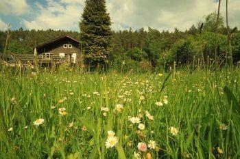 Mooiste Vakantiehuisjes in de Ardennen   Top 10
