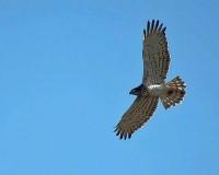 Mooiste vogelreizen in Spanje