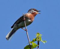 Mooiste vogelreizen in Bulgarije & Roemenië