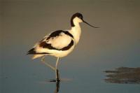 Mooiste vogelreizen in Nederland & Duitsland