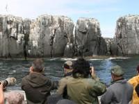 Mooiste vogelreizen in Engeland & Schotland