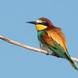 Mooiste vogelreizen in Portugal