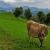 Wandelvakantie Alpenpanorama-Weg | Trektocht door Zwitserland