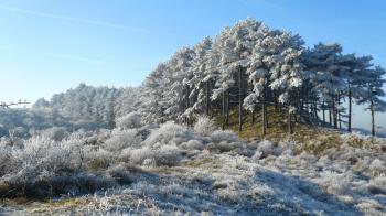 Winterwandeling Nationaal Park Zuid-Kennemerland