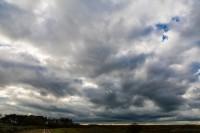 Groene Wissel-wandeling door het Noordhollands Duinreservaat