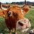 Wandelvakantie in de Franse Limousin | Onontdekt Frankrijk
