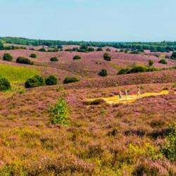 Nationaal Park De Veluwezoom: gemaakt om te wandelen