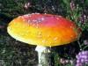 paddenstoel03.jpg