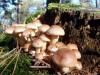 paddenstoel09.jpg