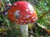 paddenstoel14.jpg
