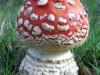 paddenstoel15.jpg