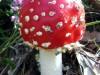 paddenstoel16.jpg