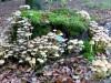 paddenstoel18.jpg