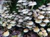 paddenstoel19.jpg
