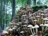 paddenstoel20.jpg