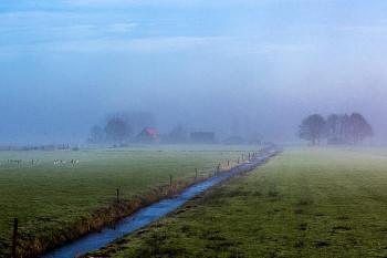 Rondje Naardermeer | Op jacht naar ijsvogels & vossen