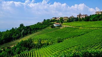 Culinaire wandelvakantie Piemonte & Langhe   SNP Natuurreizen