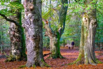 Verkiezing Mooiste wandeling 2018