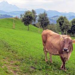Wandelvakantie Alpenpanorama-Weg   Trektocht door Zwitserland