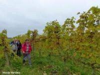 Mooiste wandeling 2019: Wijnwandeling Groesbeek
